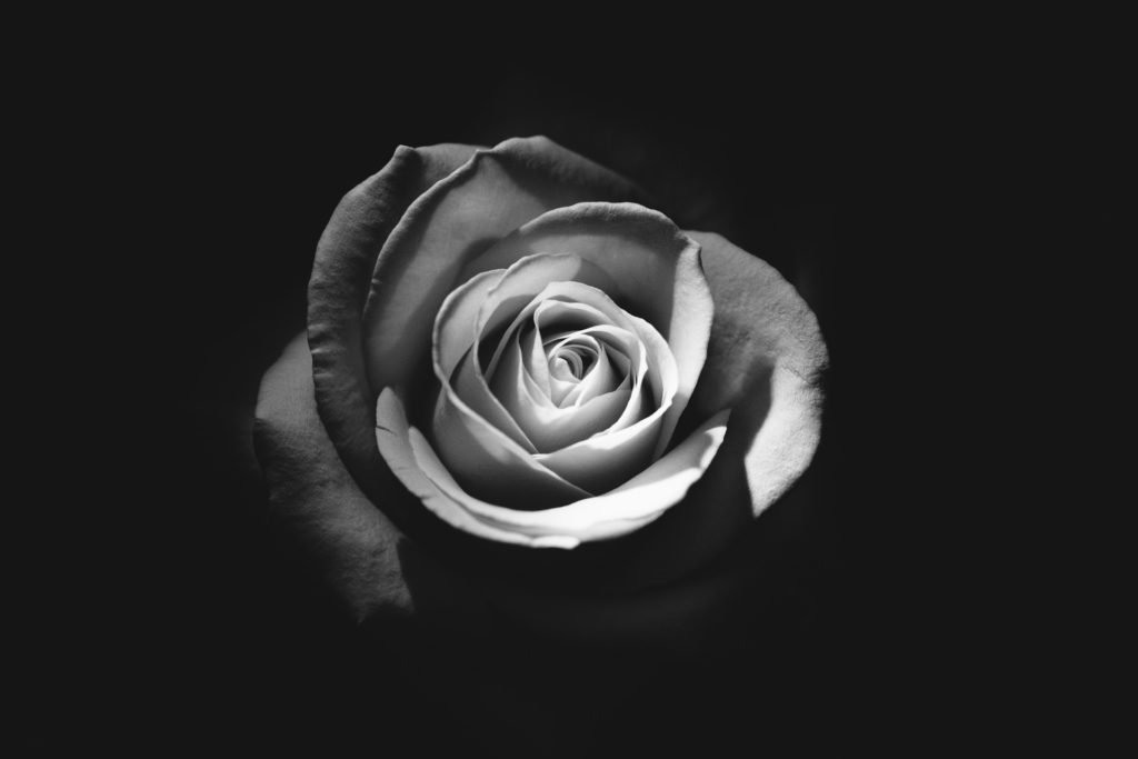 Dieses Bild hat ein leeres Alt-Attribut. Der Dateiname ist Rose-in-white-1-1024x683.jpg